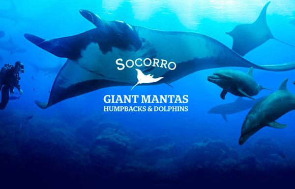 GIANT-MANTAS-AND-DOLPHINS-DIVING-SOCORRO-ISLAND