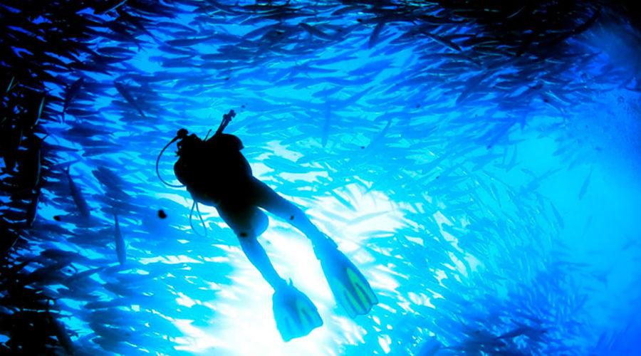 arrowsmith-cancun-diving-tour