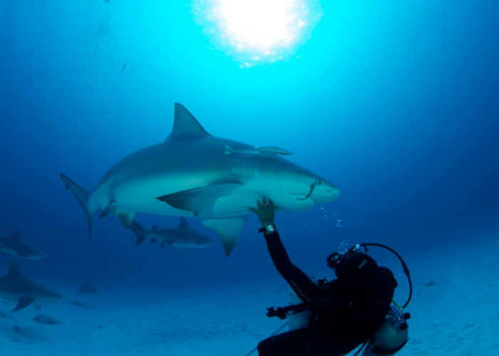 bullsharks-cancun-diving-tour