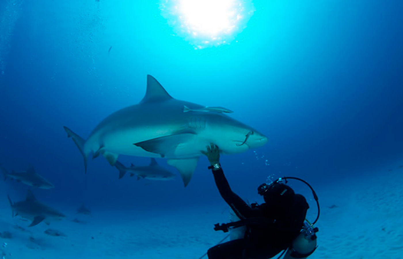 bullsharks cancun diving tour