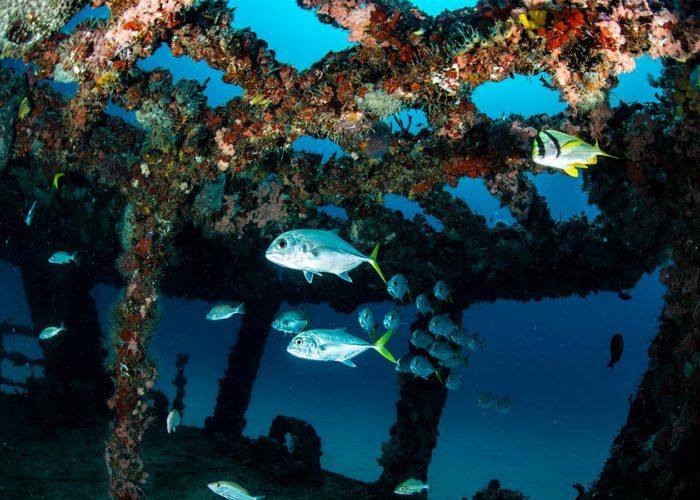 Poseidon Dive Package